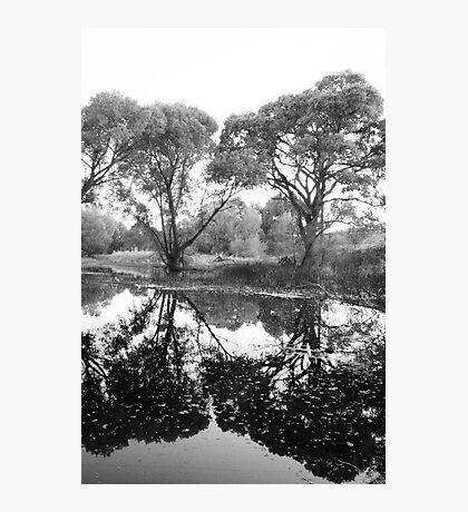 Tree Vanity Photographic Print