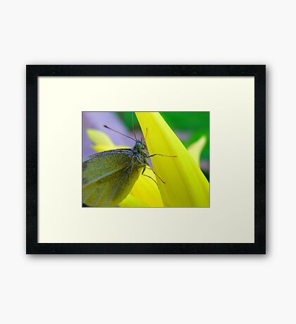 Don't it make my blue eyes... bluer Framed Print