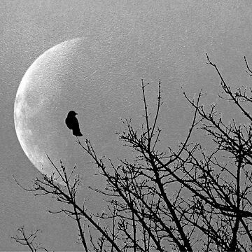 Moon and silhouette bird   by HaleyRedshaw