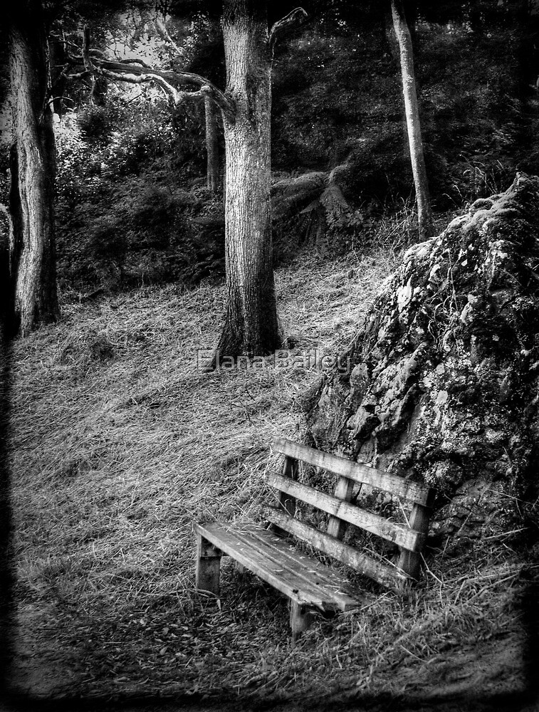 The bench at Guide Falls in monochrome by Elana Bailey