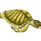 Olive Ridley Sea Turtle by Suzannah Alexander