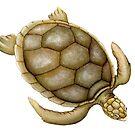 Flatback Sea Turtle by Suzannah Alexander