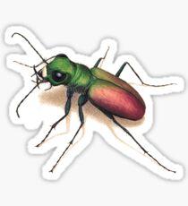 Beetle Sticker