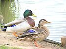 A couple of quackers. by Livvy Young