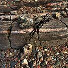 Sea detritus by Drodbar