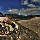 Shell on the rocks 2 by Drodbar