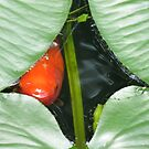 Through the Lily Pad by Sandra Fortier