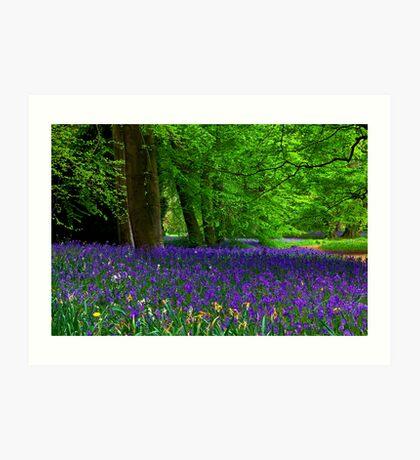 Bluebell Wood - Thorpe Perrow #1  (Spring) Art Print