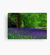 Bluebell Wood - Thorpe Perrow #1  (Spring) Canvas Print