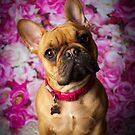 NALA / French Bulldog by Peggy Colclough