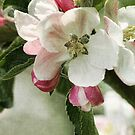 Cherry Pink and Apple Blossom White by Amanda White