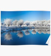 Winter White In Reflected Blue Poster