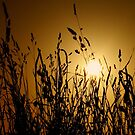 gold dusk by Ingrid Beddoes