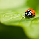 Ladybird by muzy