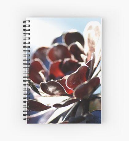 Succulent  in the Spotlight Spiral Notebook