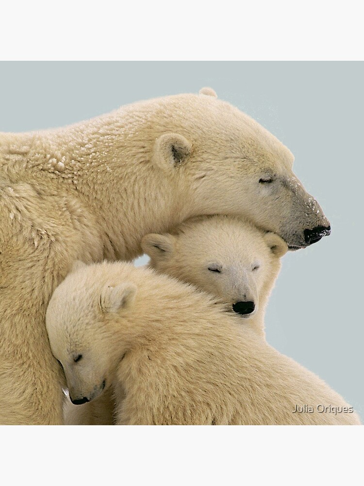 Polar bear by juliaoriques