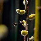 Biene - Binen von laura-S