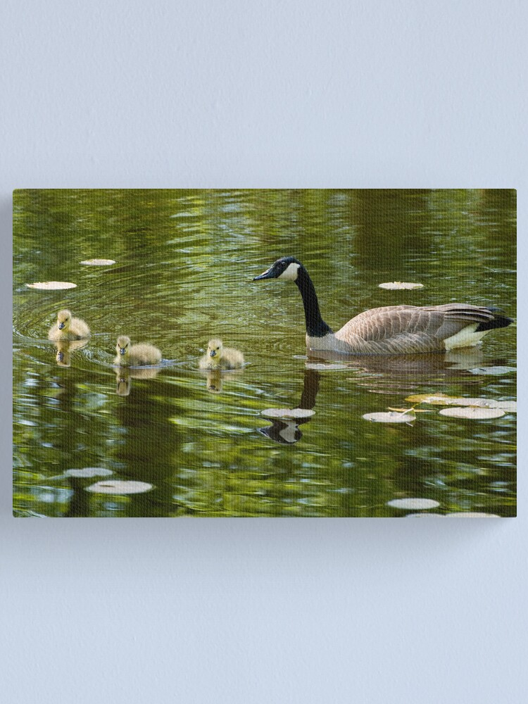 Alternate view of Mom and Goslings Canvas Print