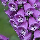 Purple Watchacallit Flower by Corkle