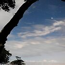 Stars over Fantail Bay by Paul Mercer