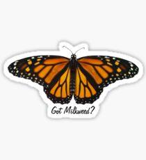Pegatina Mariposa Monarca - ¿Tienes algodoncillo?