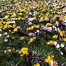 Frühling von trish725