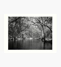 Dark Forest - Serenity Defined  Art Print