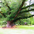 Live Oak on Magnolia Plantation by BShirey