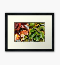 Autumn in Oz Framed Print