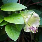 Flowering Liana - a Singular Exotic Bloom by Georgia Mizuleva