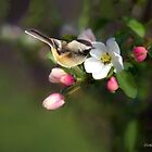 Apple Blossom and Chickadee by Kathy Weaver