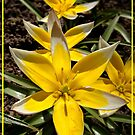 yellow and white by Eugenio