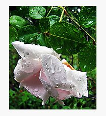 Imperfect By Nature Photographic Print