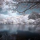 Across the lake by shutterjunkie
