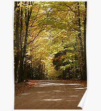 Colors of the fall - Forest road Poster