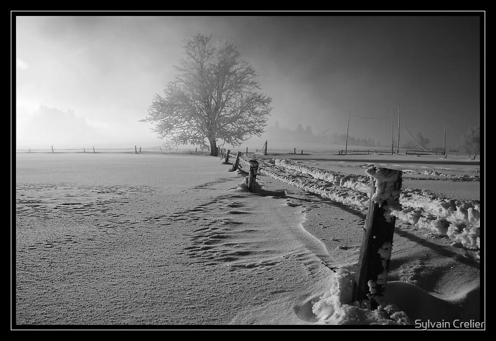 Tough winter by Sylvain Crelier