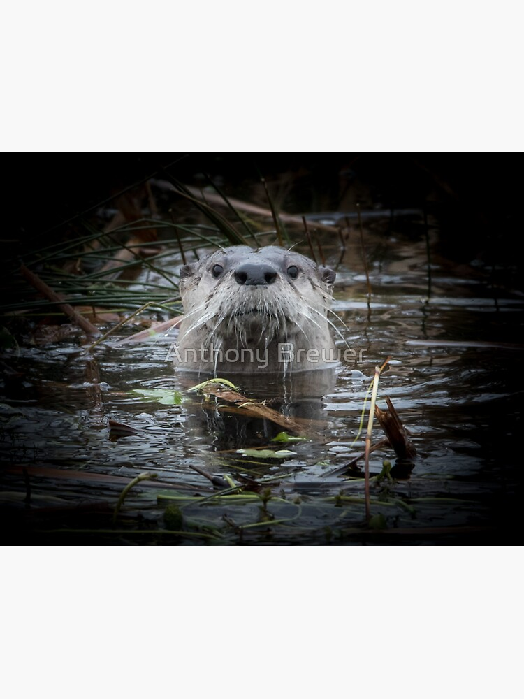 Otter is watching you by dailyanimals