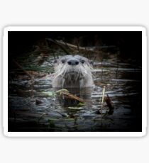 Otter is watching you Sticker