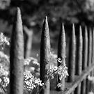 NATURE WILL PREVAIL by Redtempa