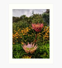 South African flowers Art Print