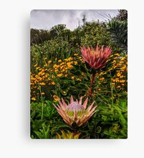 South African flowers Canvas Print
