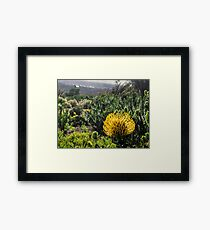 Yellow South African flower Framed Print