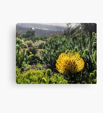 Yellow South African flower Canvas Print