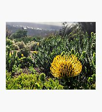 Yellow South African flower Photographic Print