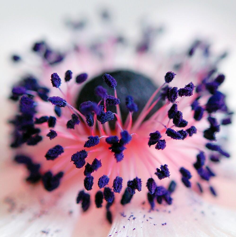 Powdered Ink - A Flower Macro by Demoiselle