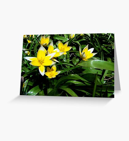 First Spring Blooms Greeting Card