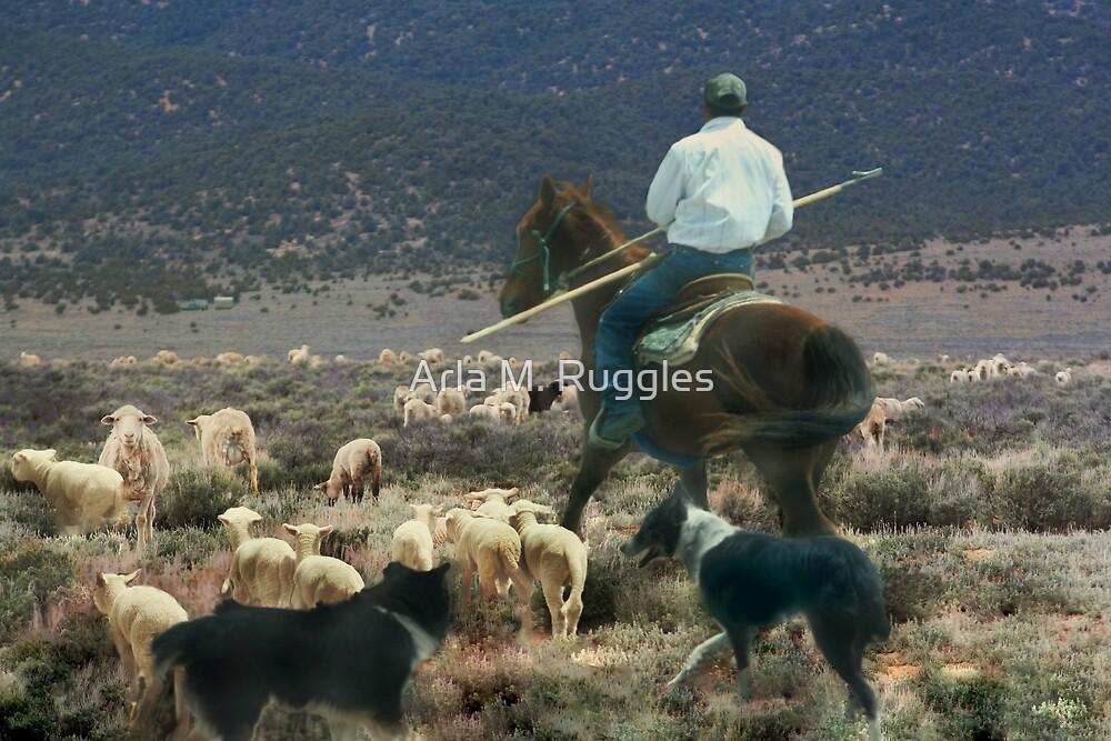 Sheepherder by Arla M. Ruggles