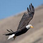 Eagle Eye by DawsonImages