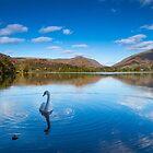 Grasmere Wasserschwäne, Cumbria von JMChown