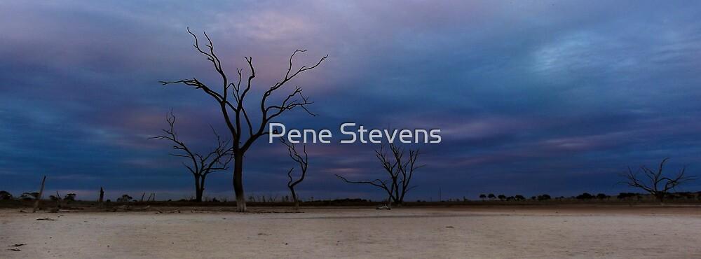Untitled by Pene Stevens